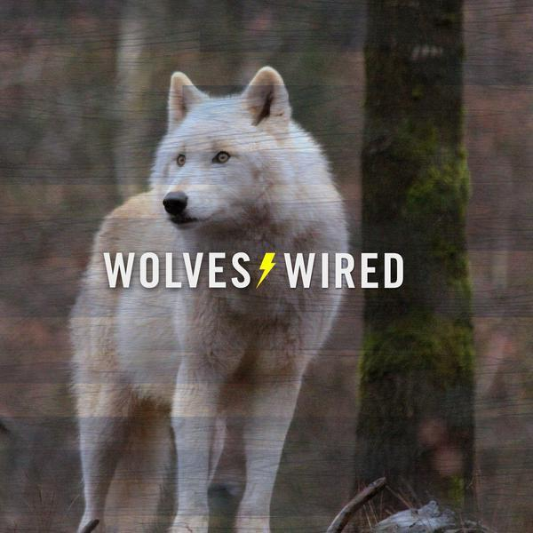 Wolves Wired Podcast Ep. 5 - Media Day Edition