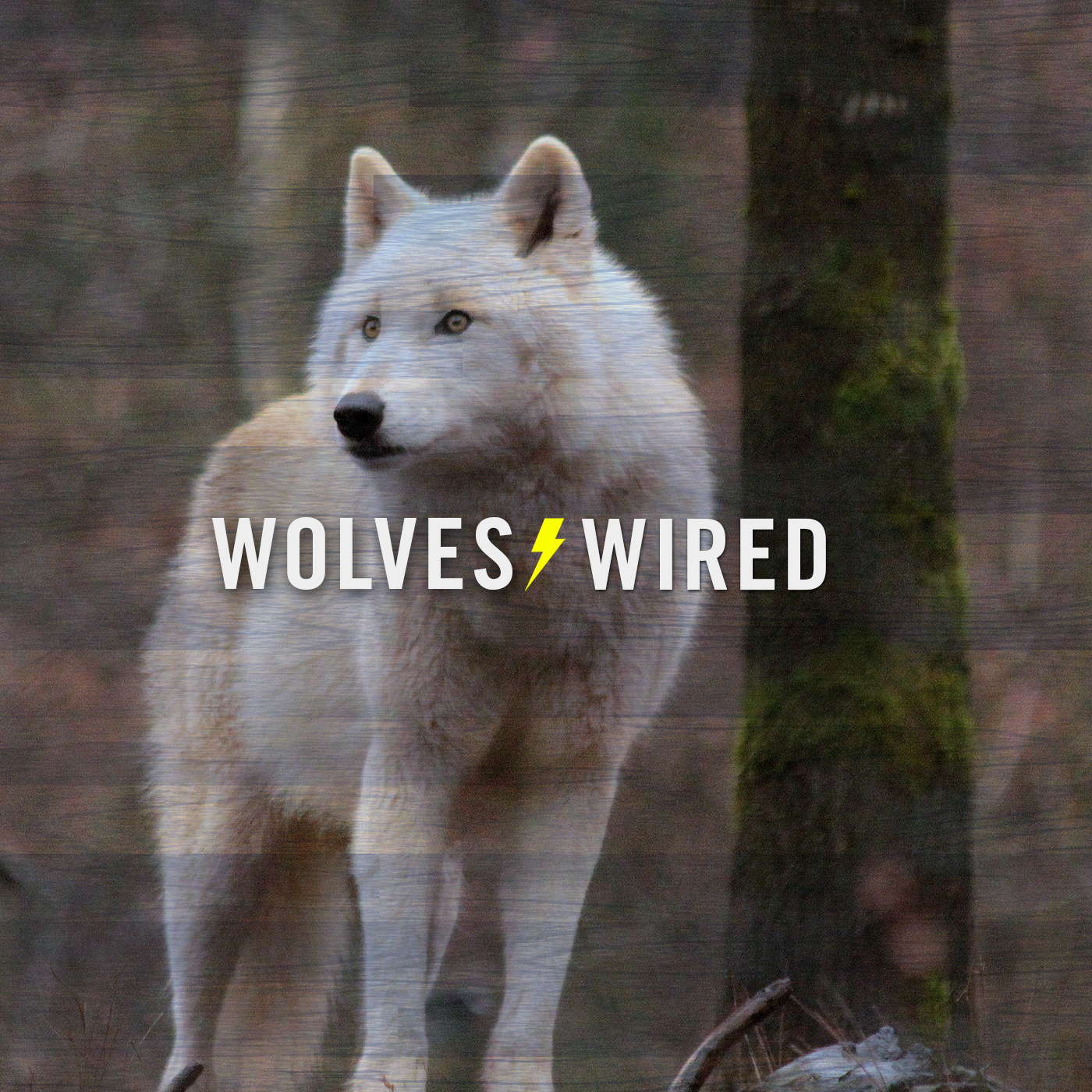 Wolves Wired Ep. 11 - Let's Talk About Sam Mitchell