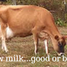 Raw milk...good or bad-