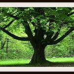 TreeserviceIndy