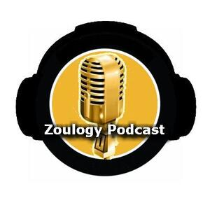 Zoulogy: A Mizzou Tigers Podcast