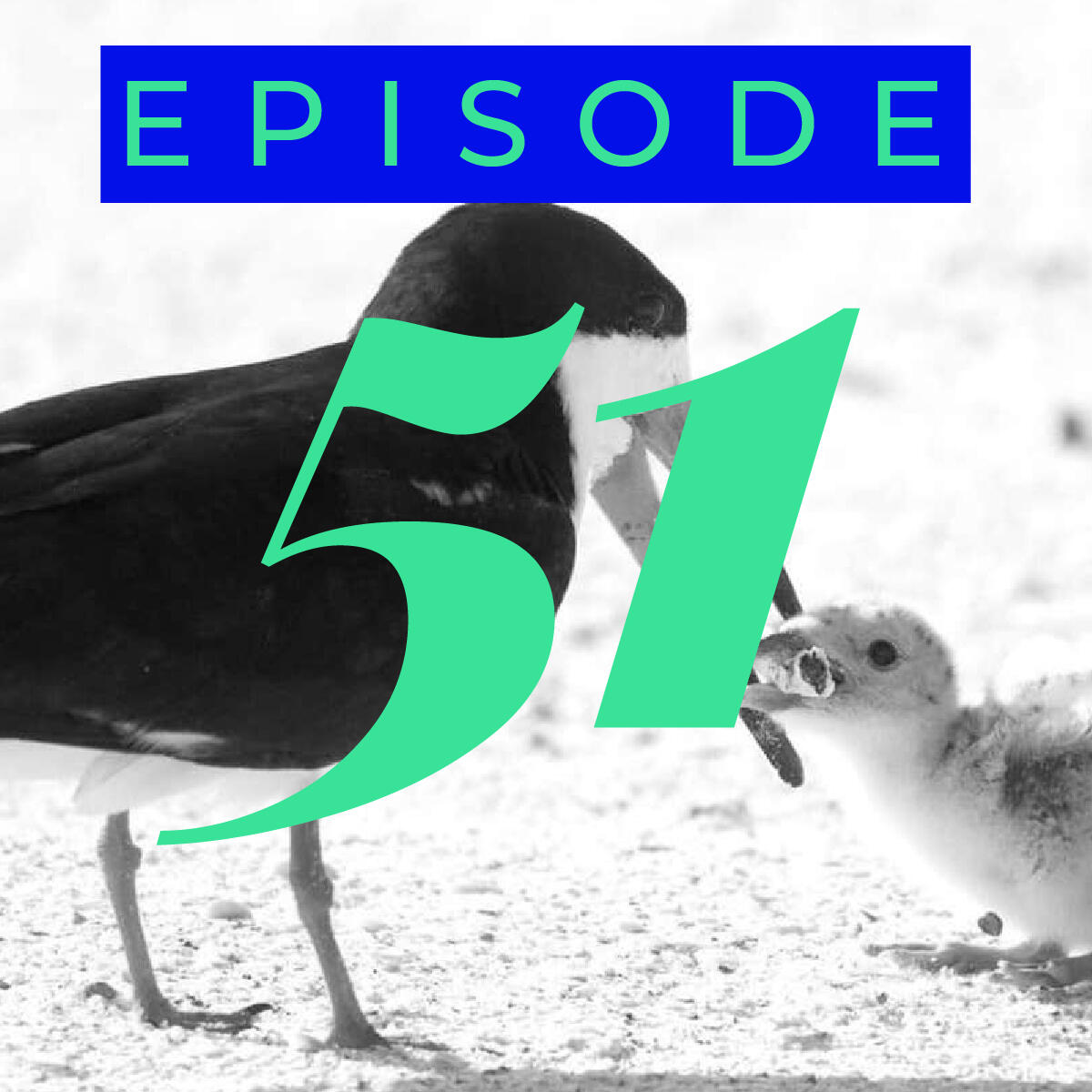 51: People growing horns, Birds eating cigarettes, Home-grown chat app