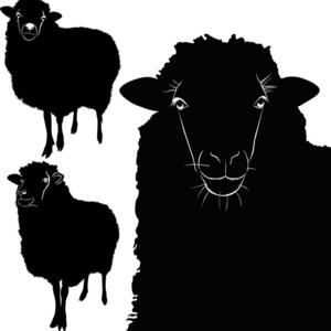 Black Sheep Voices