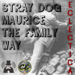 stray-dog-eclectica