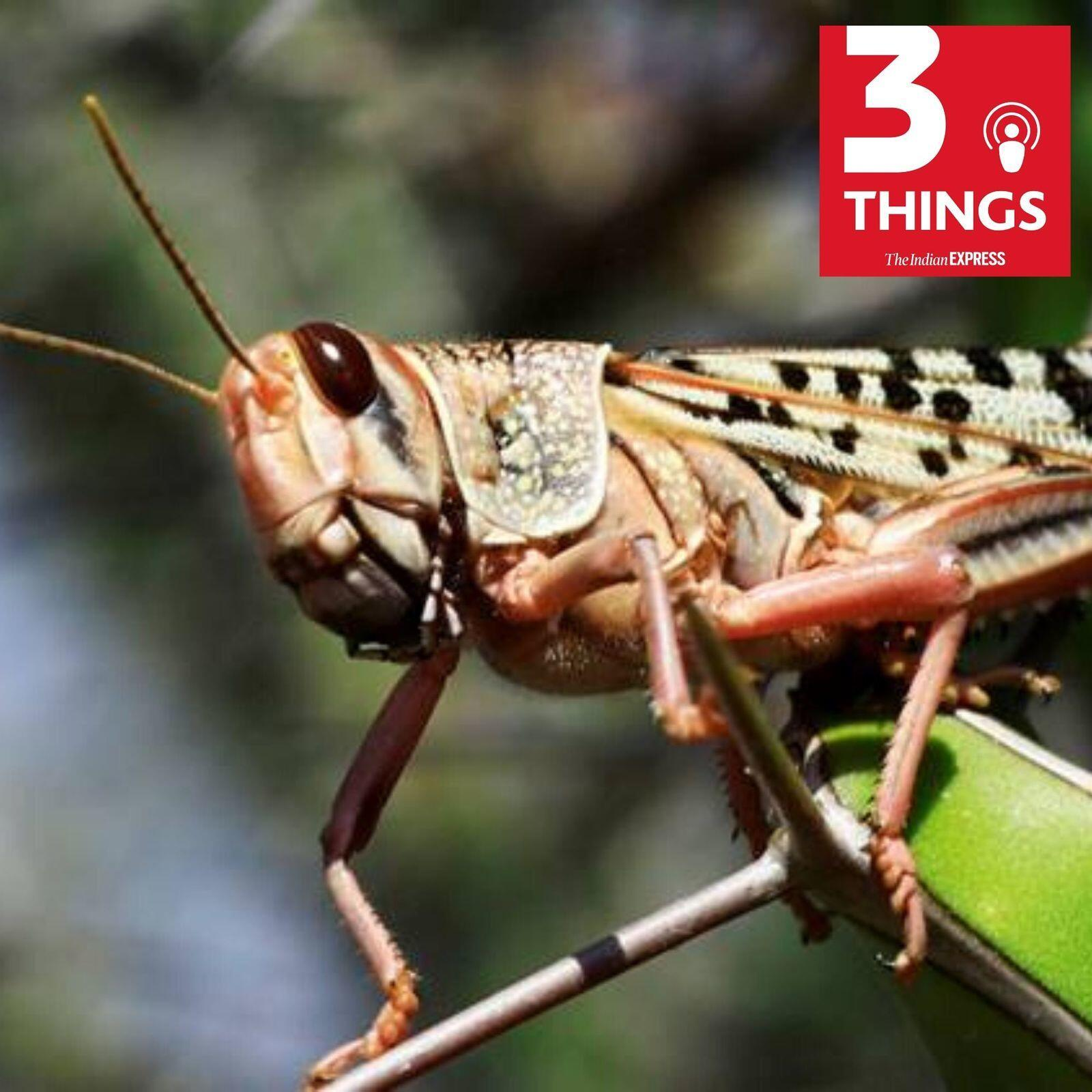 892: Desert locusts attack, deaths on Shramik special trains, why India stands by HCQ use