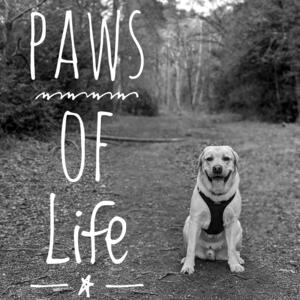 Paws of Life