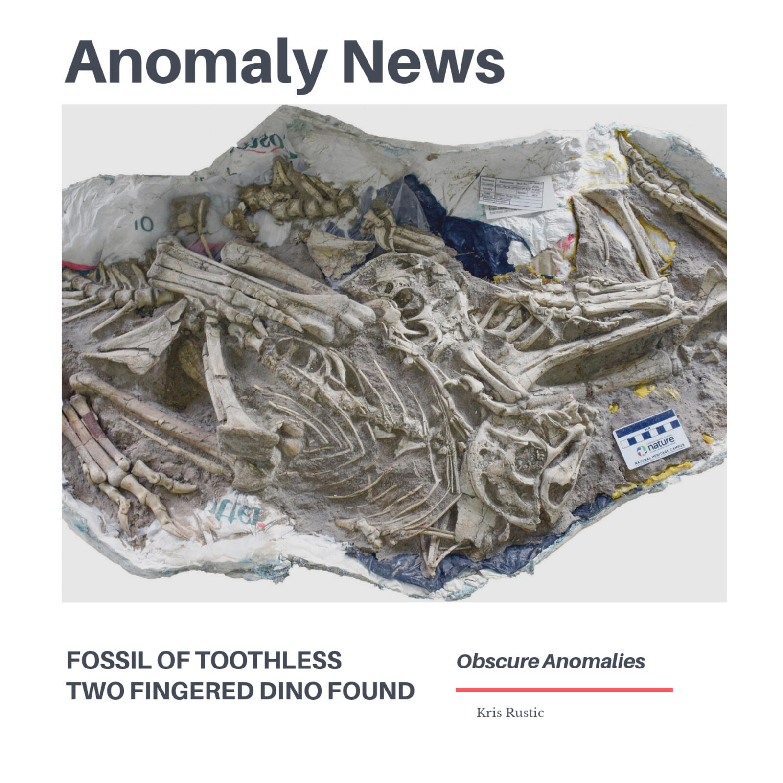 Anomaly News: Fossil of Toothless Two Fingered Dino Found