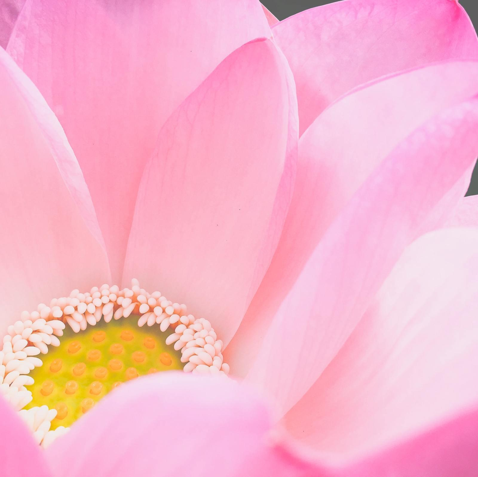 Blooming Meditation for Opening and Releasing