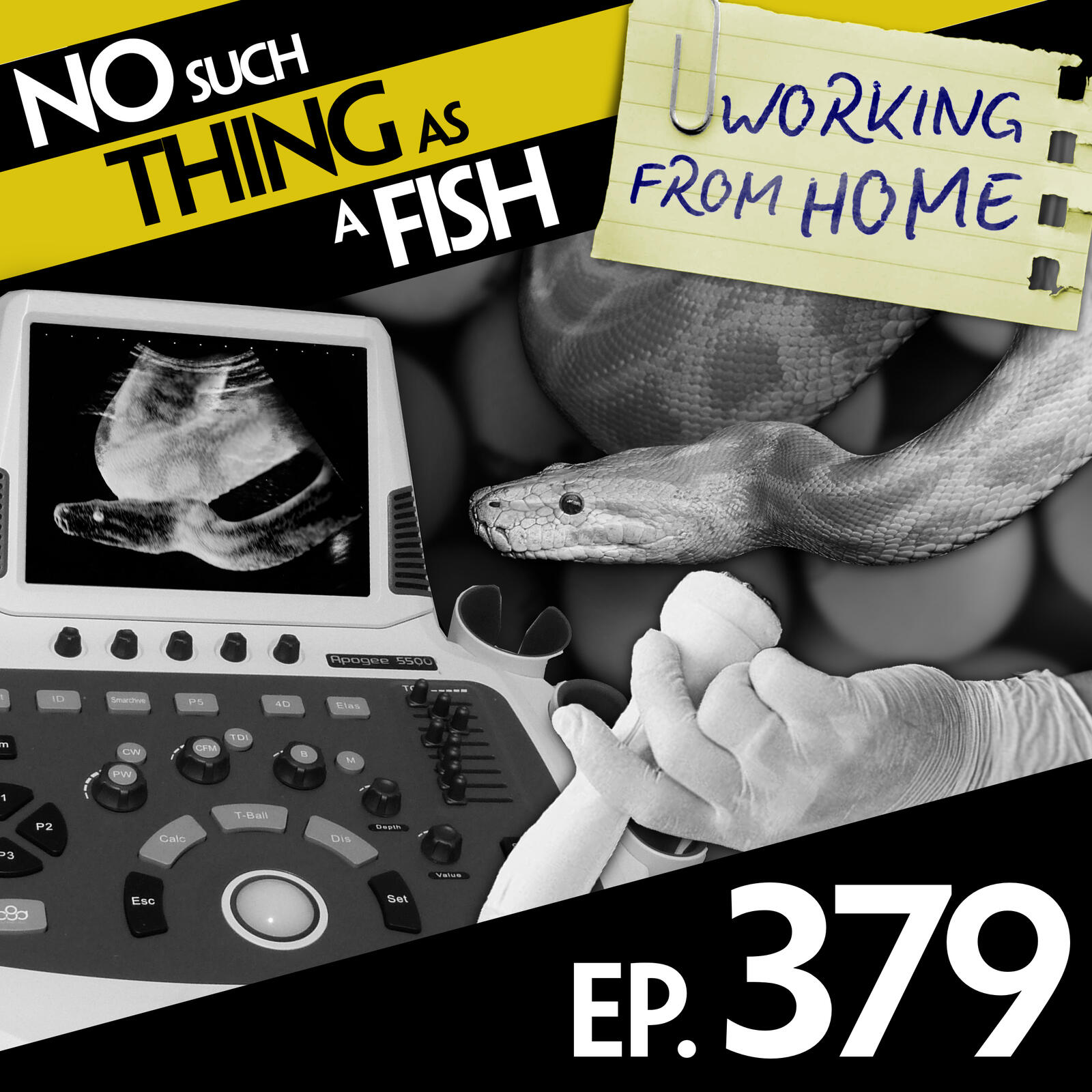 379: No Such Thing As A Ping Pong Ballbag